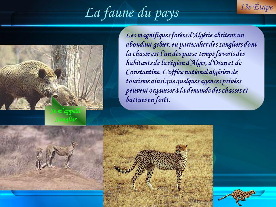 La faune du pays Les magnifiques forêts d'Algérie abritent un abondant gibier, en particulier des sangliers dont la chasse est l'un des passe-temps fa