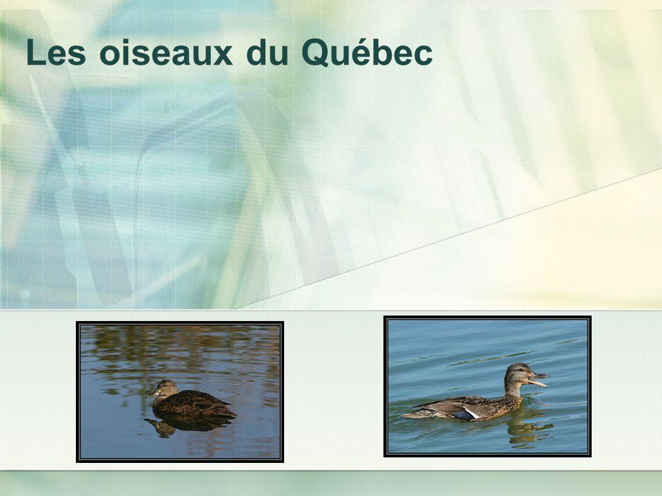 Les oiseaux du Québec