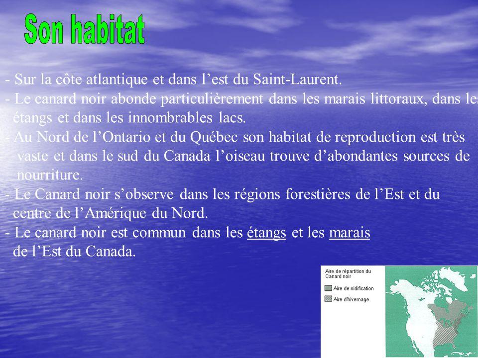 - Sur la côte atlantique et dans lest du Saint-Laurent. - Le canard noir abonde particulièrement dans les marais littoraux, dans les étangs et dans le