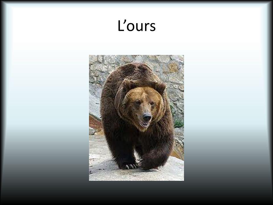 Lours