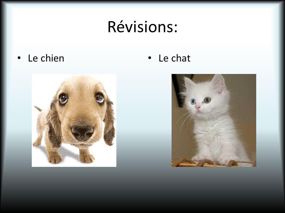 Révisions: Le chien Le chat