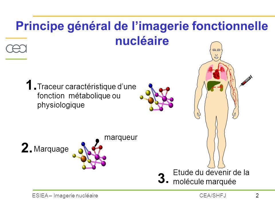 3ESIEA – Imagerie nucléaireCEA/SHFJ Principe de limagerie nucléaire :exemple Matière première indispensable à la fabrication des hormones thyroïdiennes: Iode 1.