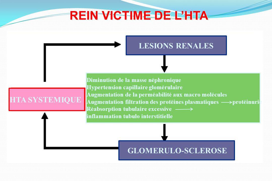 REIN VICTIME DE LHTA HTA SYSTEMIQUE LESIONS RENALES Diminution de la masse néphronique Hypertension capillaire glomérulaire Augmentation de la perméab