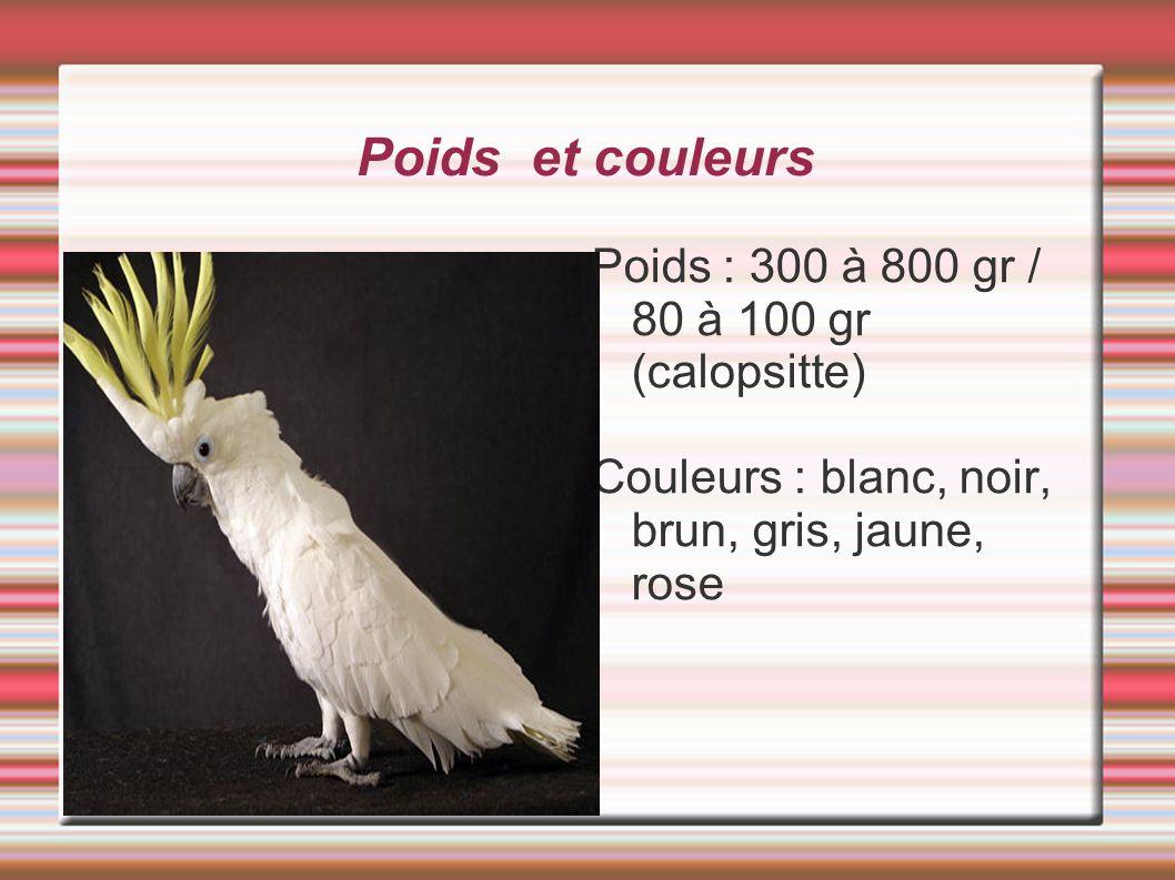 Poids et couleurs Poids : 300 à 800 gr / 80 à 100 gr (calopsitte) Couleurs : blanc, noir, brun, gris, jaune, rose