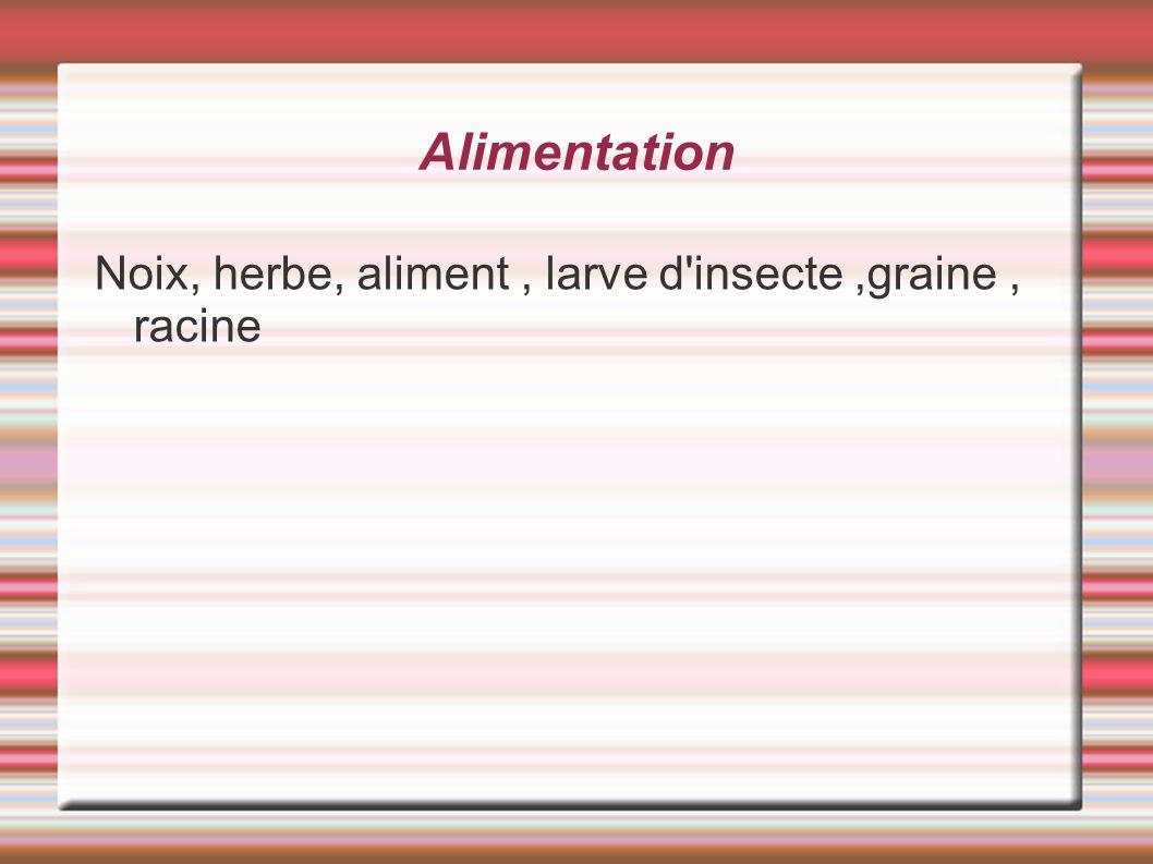 Alimentation Noix, herbe, aliment, larve d'insecte,graine, racine