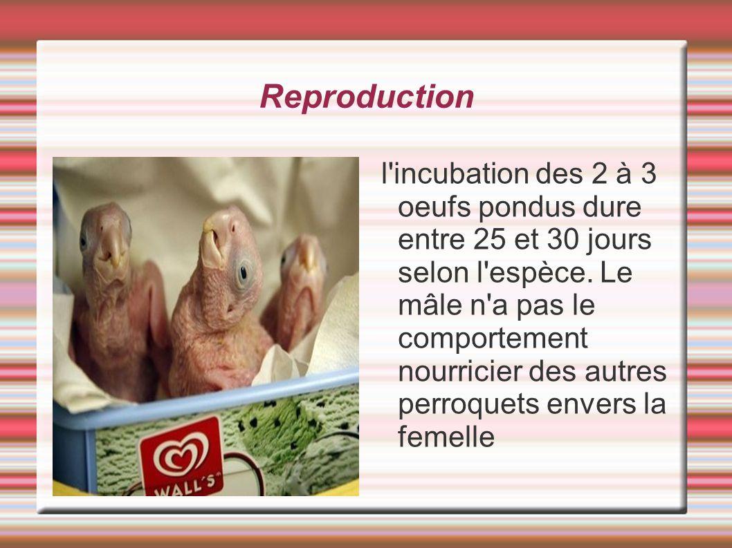 Reproduction l'incubation des 2 à 3 oeufs pondus dure entre 25 et 30 jours selon l'espèce. Le mâle n'a pas le comportement nourricier des autres perro