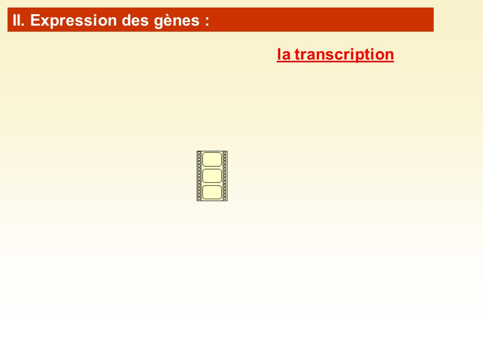 II. Expression des gènes : la transcription