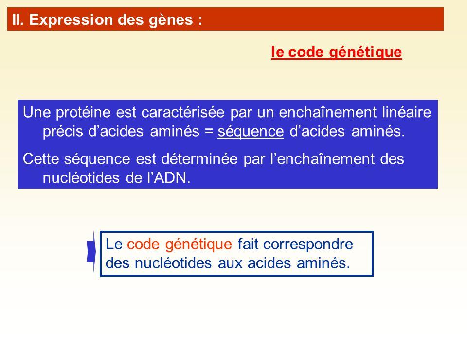 Une protéine est caractérisée par un enchaînement linéaire précis dacides aminés = séquence dacides aminés. Cette séquence est déterminée par lenchaîn