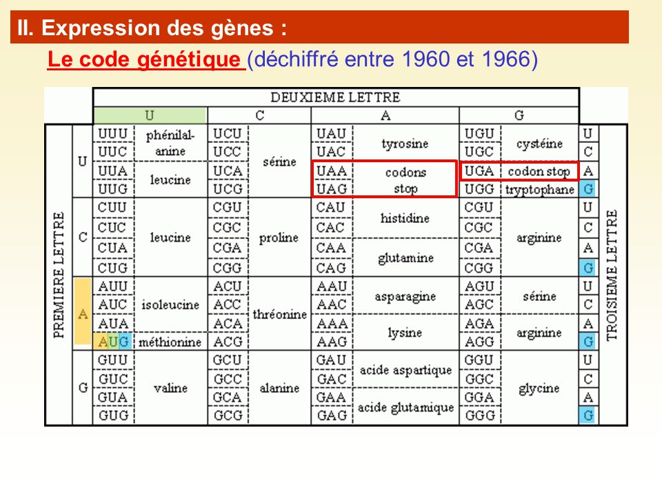 Le code génétique (déchiffré entre 1960 et 1966) II. Expression des gènes : 64 combinaisons pour 20 acides aminés.