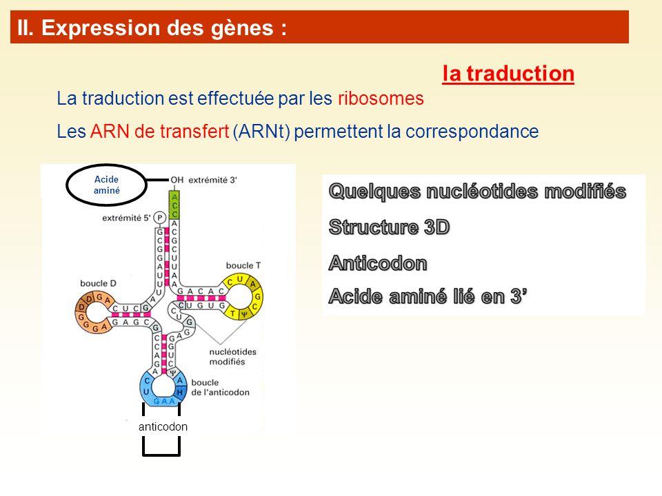 La traduction est effectuée par les ribosomes Les ARN de transfert (ARNt) permettent la correspondance Acide aminé anticodon II. Expression des gènes