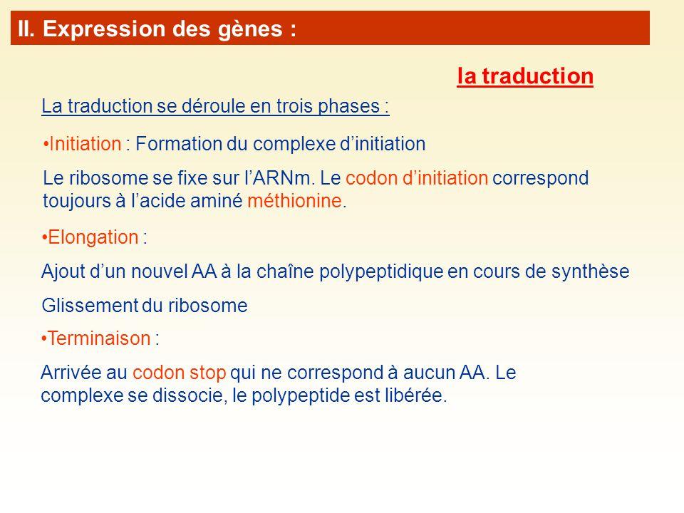 La traduction se déroule en trois phases : Elongation : Ajout dun nouvel AA à la chaîne polypeptidique en cours de synthèse Glissement du ribosome Initiation : Formation du complexe dinitiation Le ribosome se fixe sur lARNm.