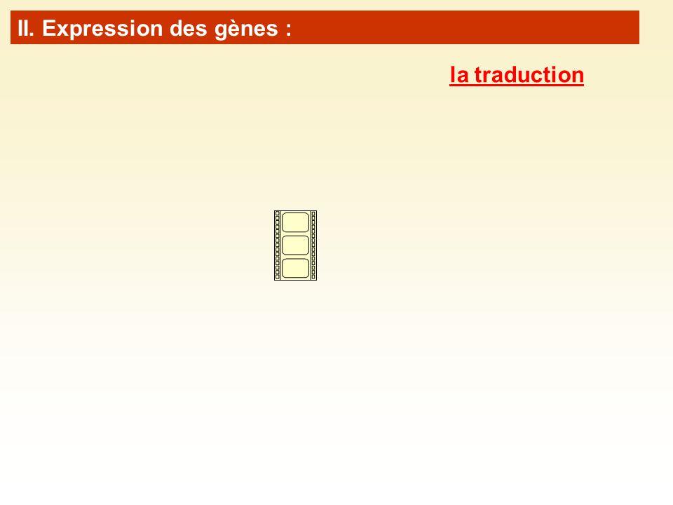 II. Expression des gènes : la traduction