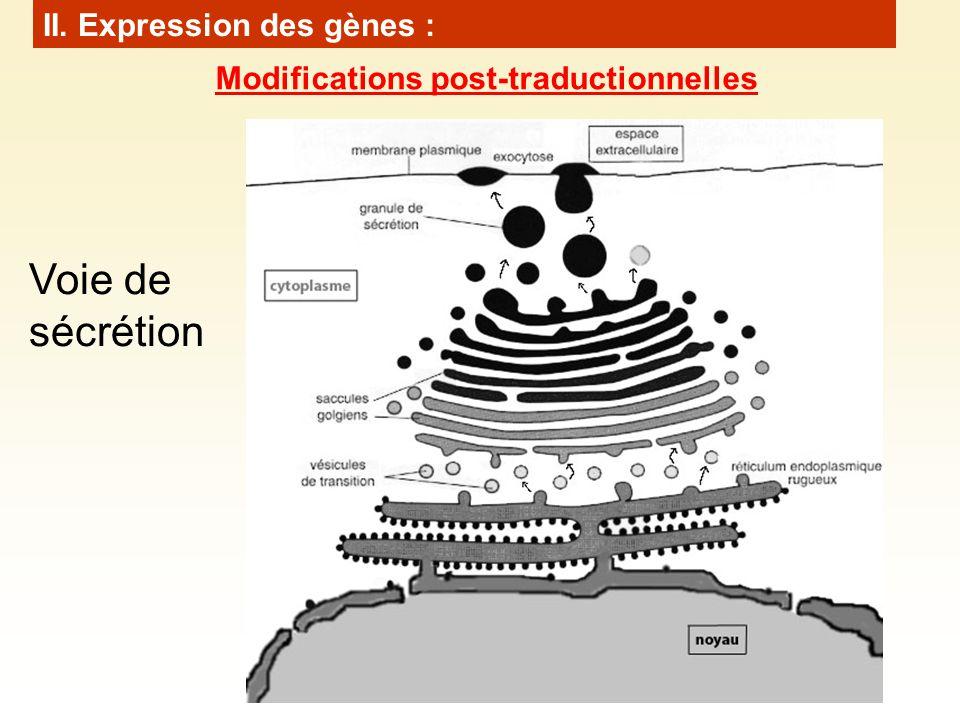 Voie de sécrétion II. Expression des gènes : Modifications post-traductionnelles