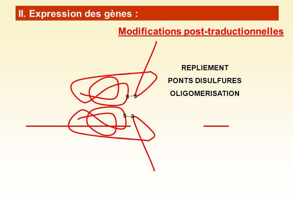 II. Expression des gènes : s s s s REPLIEMENT PONTS DISULFURES OLIGOMERISATION Modifications post-traductionnelles