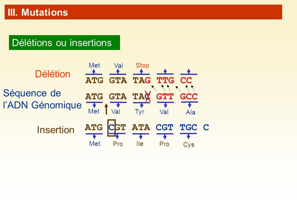 III. Mutations Délétions ou insertions ATG GTA TAC GTT GCC Met Val Tyr Val Ala ATG GTA TAG TTG CC Stop Met Val Délétion ATG CGT ATA CGT TGC C Met Pro