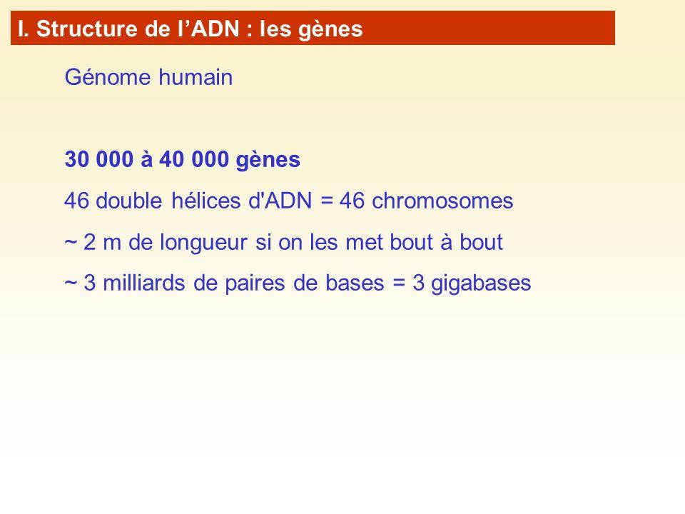 Génome humain 30 000 à 40 000 gènes 46 double hélices d ADN = 46 chromosomes ~ 2 m de longueur si on les met bout à bout ~ 3 milliards de paires de bases = 3 gigabases I.