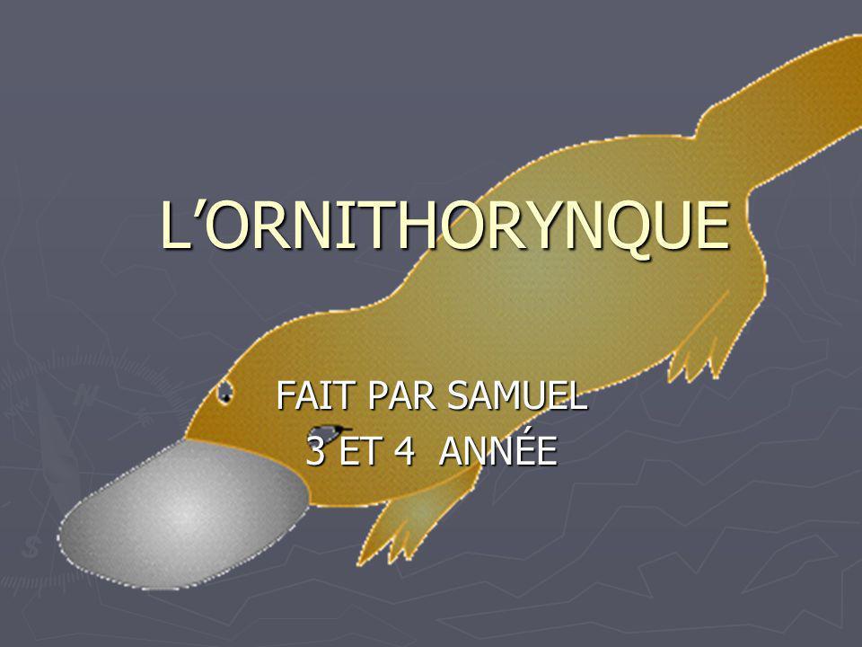 LORNITHORYNQUE FAIT PAR SAMUEL 3 ET 4 ANNÉE