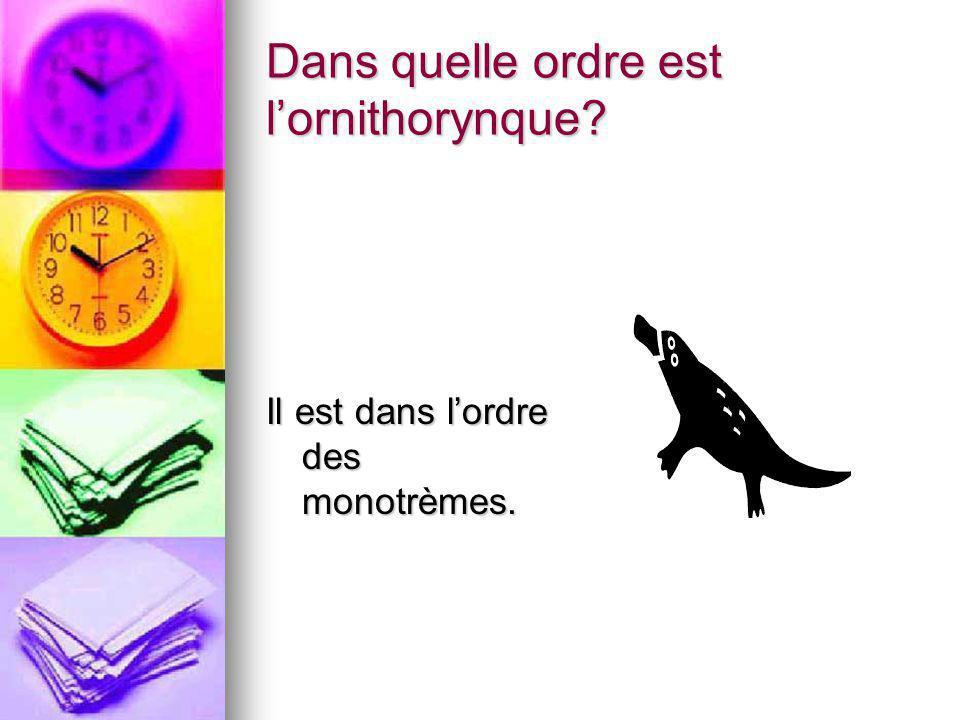 Dans quelle ordre est lornithorynque? Il est dans lordre des monotrèmes.