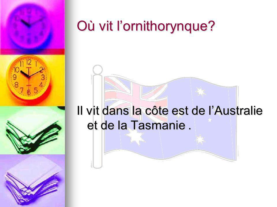 Où vit lornithorynque? Il vit dans la côte est de lAustralie et de la Tasmanie.