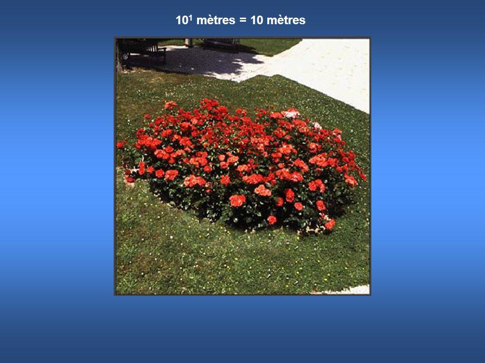 10 1 mètres = 10 mètres