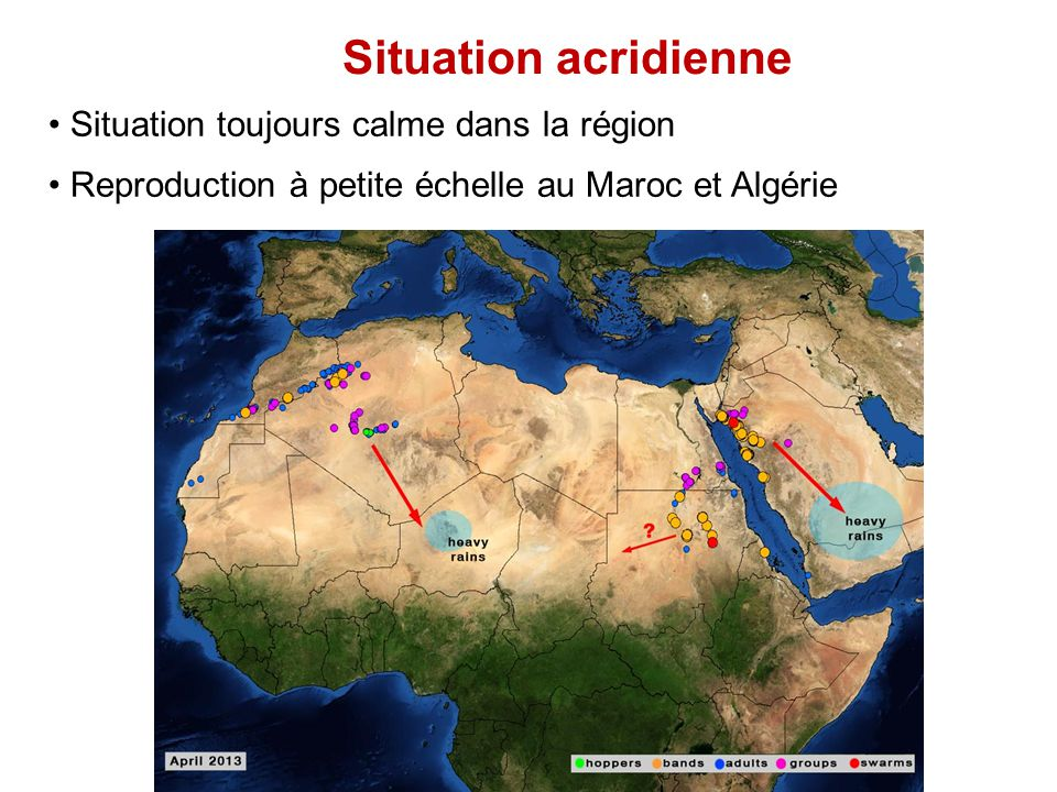 Situation acridienne Situation toujours calme dans la région Reproduction à petite échelle au Maroc et Algérie