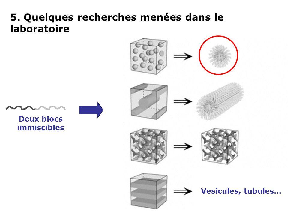 Vesicules, tubules… Deux blocs immiscibles 5. Quelques recherches menées dans le laboratoire