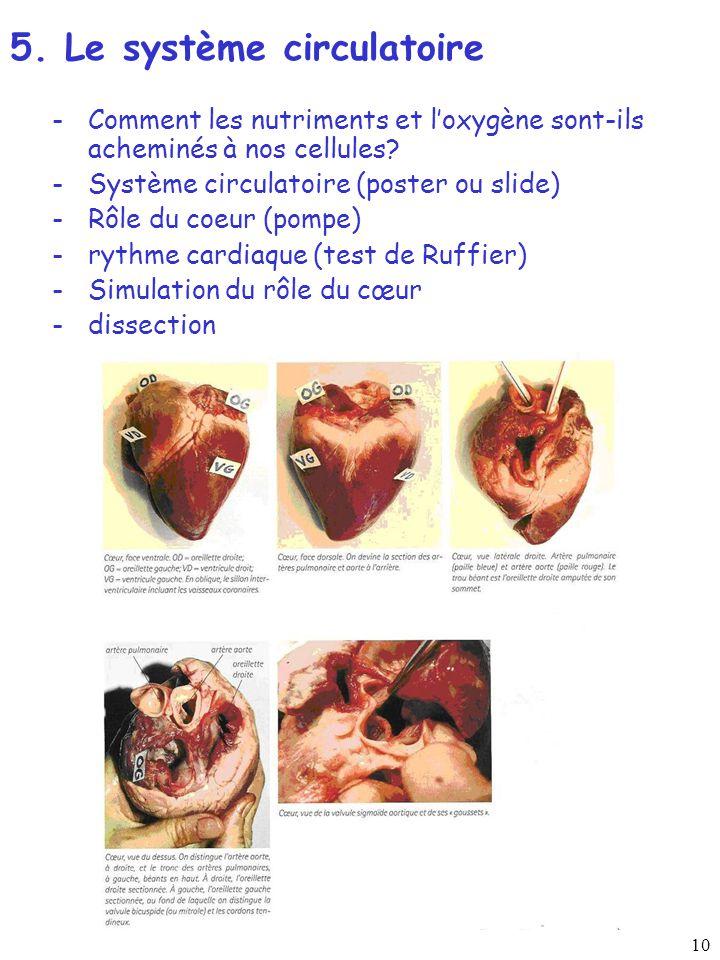 10 -Comment les nutriments et loxygène sont-ils acheminés à nos cellules? -Système circulatoire (poster ou slide) -Rôle du coeur (pompe) -rythme cardi