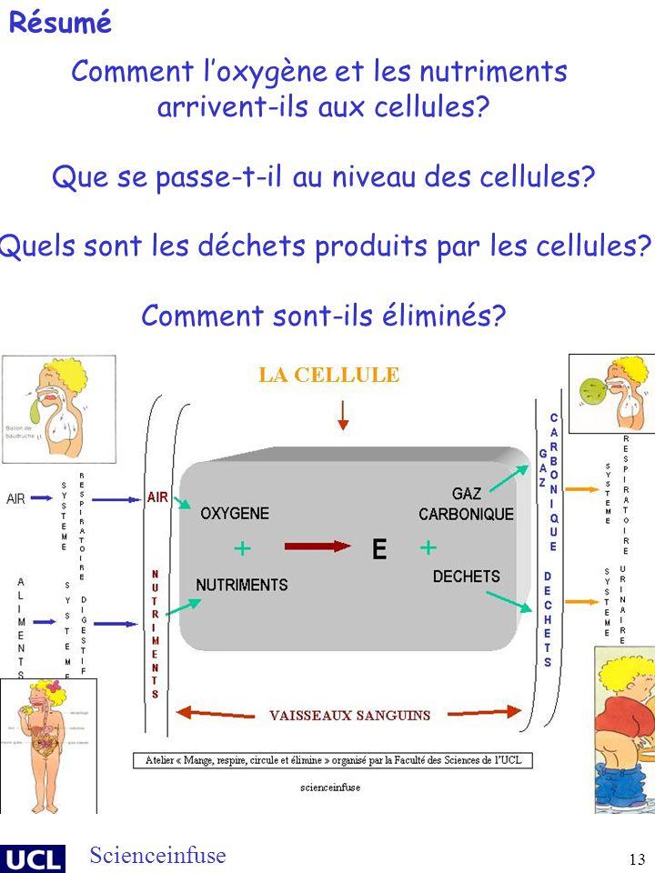 13 Comment loxygène et les nutriments arrivent-ils aux cellules? Que se passe-t-il au niveau des cellules? Quels sont les déchets produits par les cel