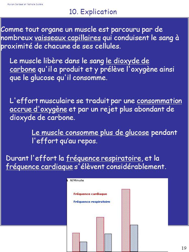 19 10. Explication Myriam De Kesel et Nathalie Dulière Durant l'effort la fréquence respiratoire, et la fréquence cardiaque s'élèvent considérablement