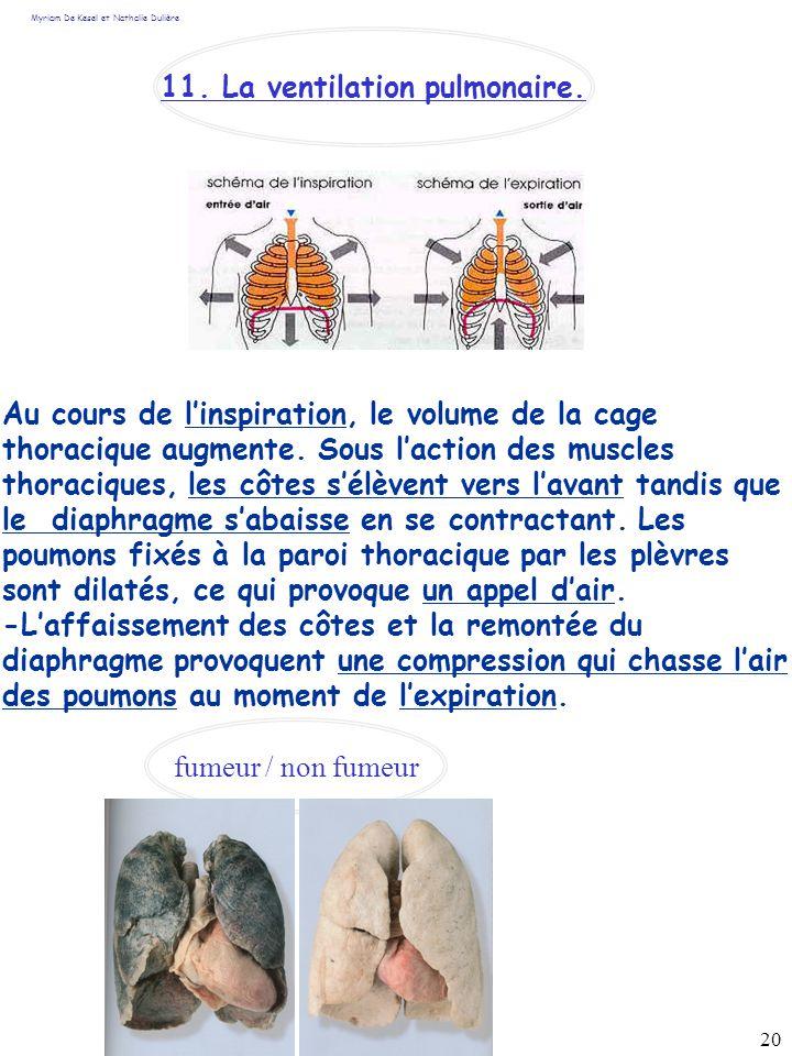 20 Myriam De Kesel et Nathalie Dulière Au cours de linspiration, le volume de la cage thoracique augmente. Sous laction des muscles thoraciques, les c