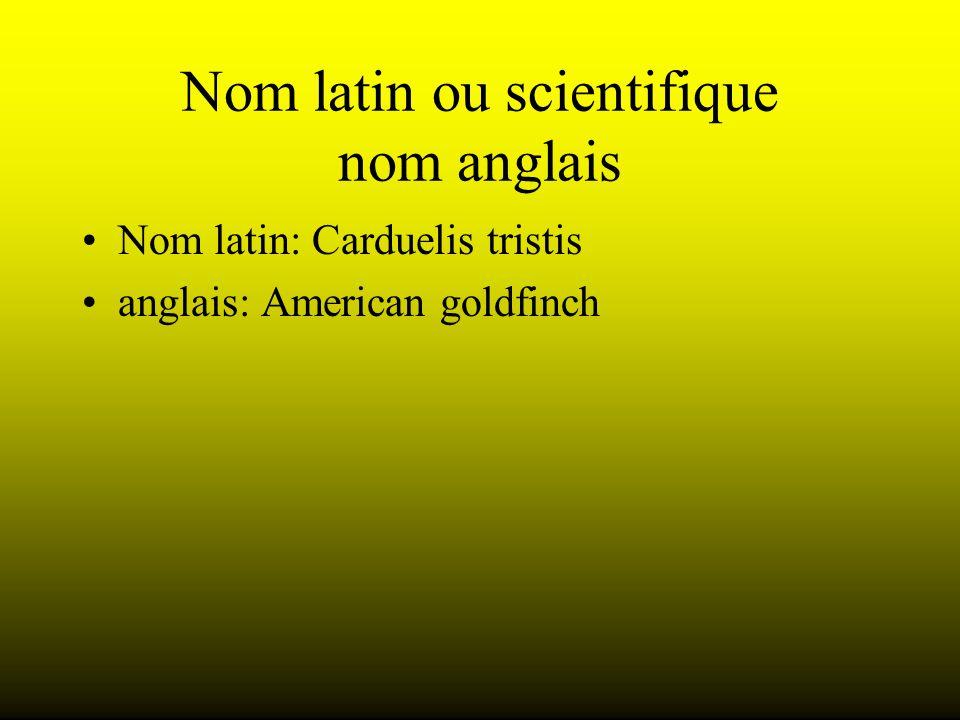 Nom latin ou scientifique nom anglais Nom latin: Carduelis tristis anglais: American goldfinch