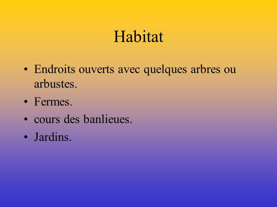 Situation géographique Le Chardonneret jaune vit en Amérique, dans le sud du Canada, de la Colombie- Britannique à Terre-Neuve.