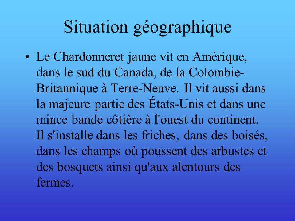 Situation géographique Le Chardonneret jaune vit en Amérique, dans le sud du Canada, de la Colombie- Britannique à Terre-Neuve. Il vit aussi dans la m