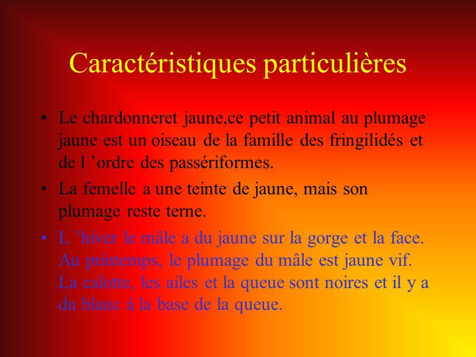 Caractéristiques particulières Le chardonneret jaune,ce petit animal au plumage jaune est un oiseau de la famille des fringilidés et de l ordre des pa
