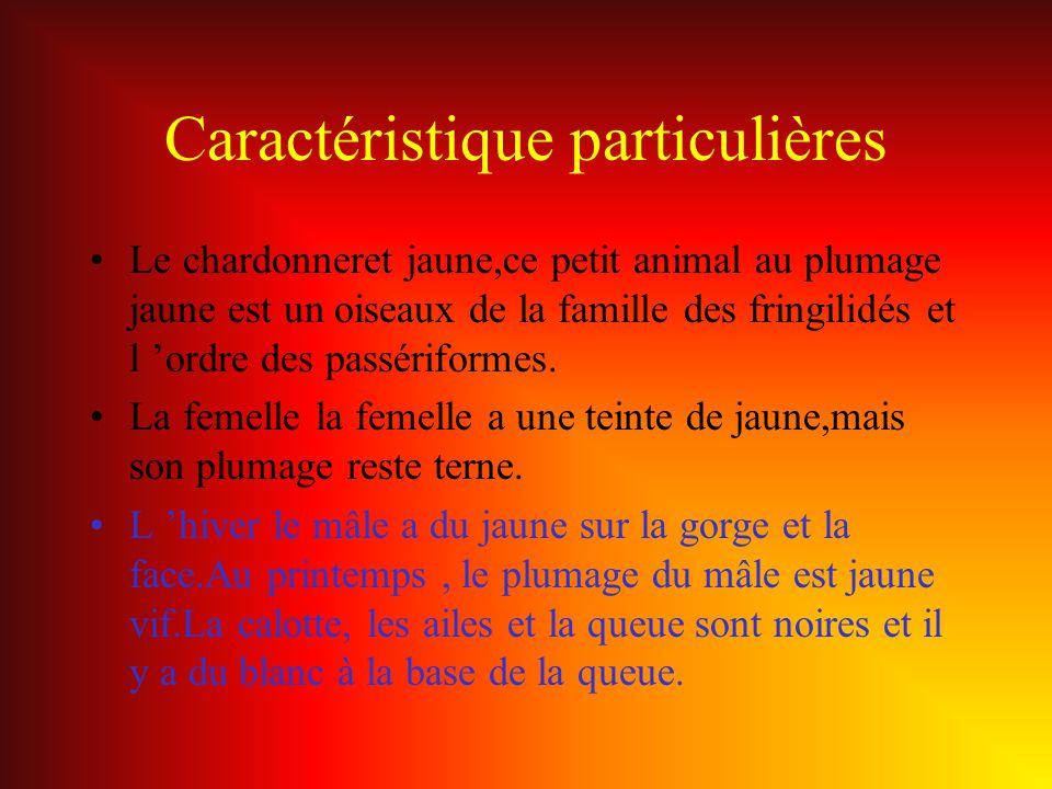Caractéristique particulières Le chardonneret jaune,ce petit animal au plumage jaune est un oiseaux de la famille des fringilidés et l ordre des passé