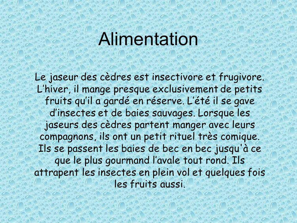 Alimentation Le jaseur des cèdres est insectivore et frugivore.
