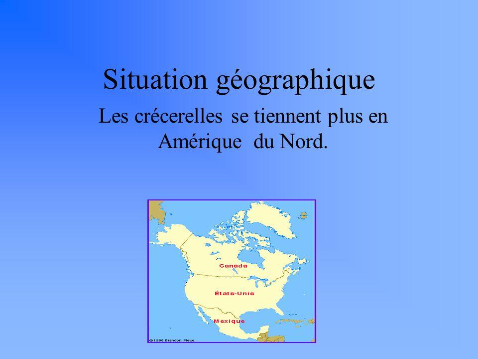 Situation géographique Les crécerelles se tiennent plus en Amérique du Nord.