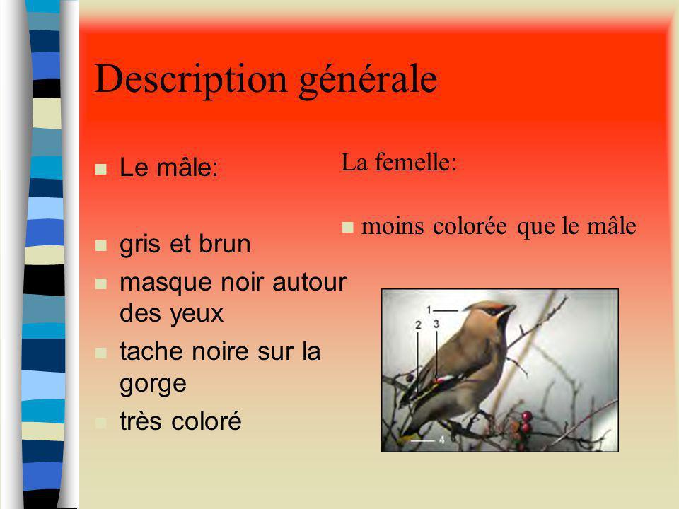 Description générale n Le mâle: n gris et brun n masque noir autour des yeux n tache noire sur la gorge n très coloré La femelle: n moins colorée que le mâle