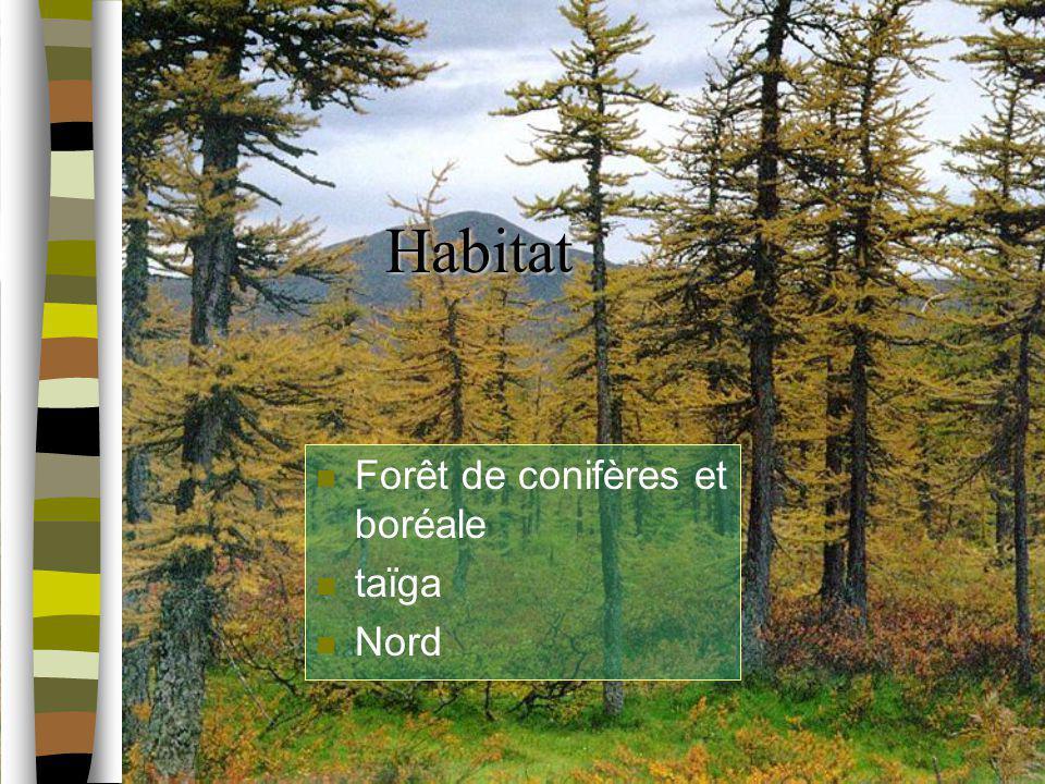 Habitat n Forêt de conifères et boréale n taïga n Nord
