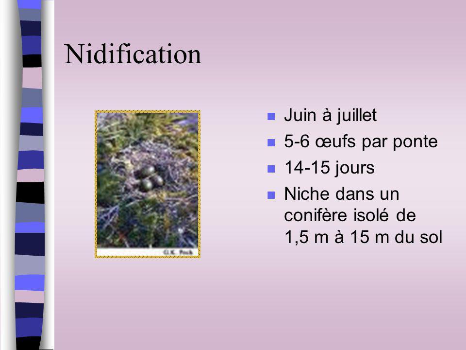 Nidification n Juin à juillet n 5-6 œufs par ponte n 14-15 jours n Niche dans un conifère isolé de 1,5 m à 15 m du sol