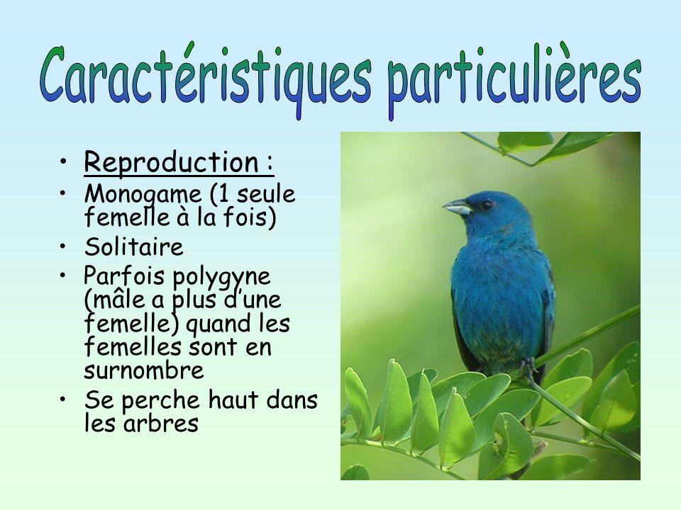 Reproduction : Monogame (1 seule femelle à la fois) Solitaire Parfois polygyne (mâle a plus d une femelle) quand les femelles sont en surnombre Se per