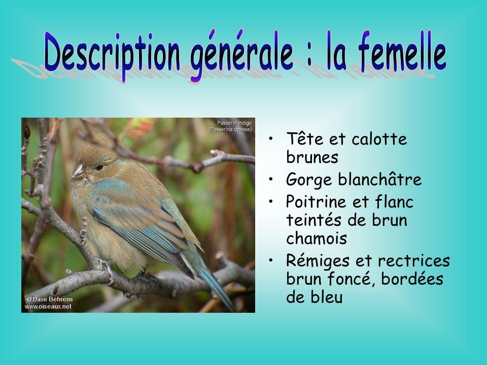 Aire de nidification: Est des États-Unis Sud du Québec, de lOntario, du Manitoba et de la Saskatchewan Aire dhivernage: Antilles Amérique centrale