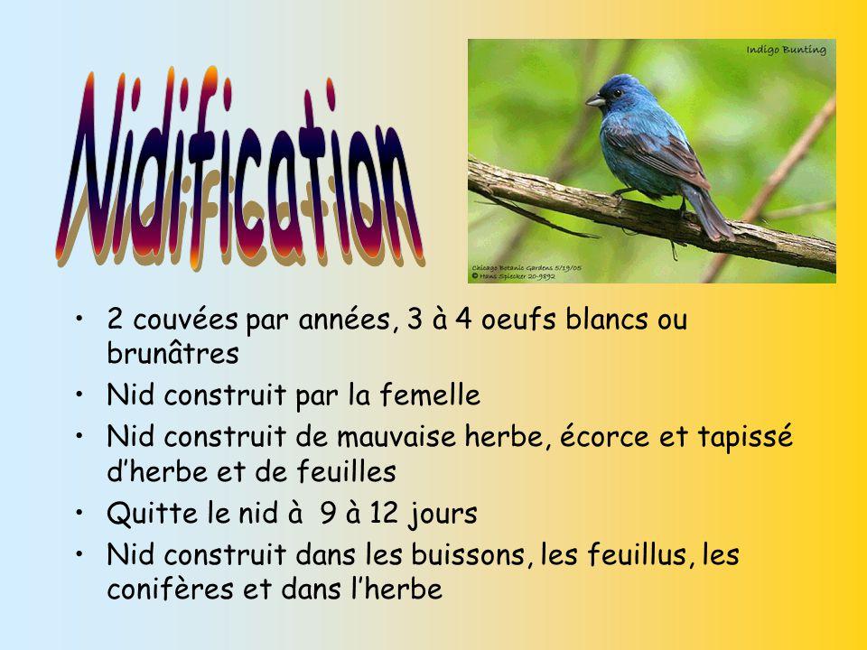 Couvaison : 12 à 14 jours Oeufs couvés par la femelle 2 couvées par année 3 à 4 œufs blancs, bleuâtres et parfois tachetés de brun ou de violet Oeufs ovales et courts Les petits : Jeune nidicole (bébé oiseau ) est couvé par la femelle Quitte le nid entre 9 et 12 jours Surtout nourri par la femelle