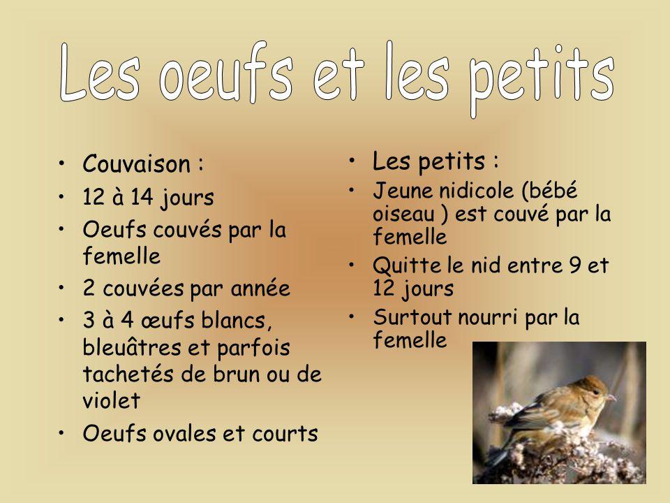 Couvaison : 12 à 14 jours Oeufs couvés par la femelle 2 couvées par année 3 à 4 œufs blancs, bleuâtres et parfois tachetés de brun ou de violet Oeufs