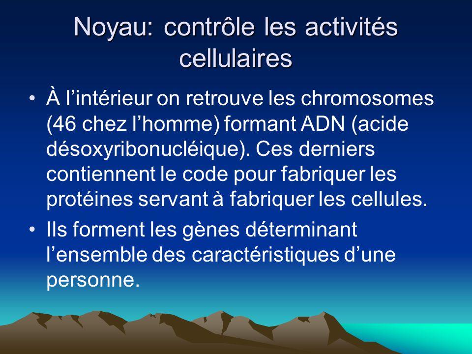 Noyau: contrôle les activités cellulaires À lintérieur on retrouve les chromosomes (46 chez lhomme) formant ADN (acide désoxyribonucléique). Ces derni