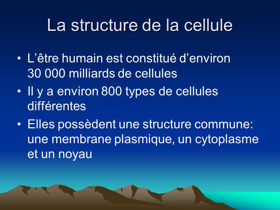 La structure de la cellule Lêtre humain est constitué denviron 30 000 milliards de cellules Il y a environ 800 types de cellules différentes Elles pos