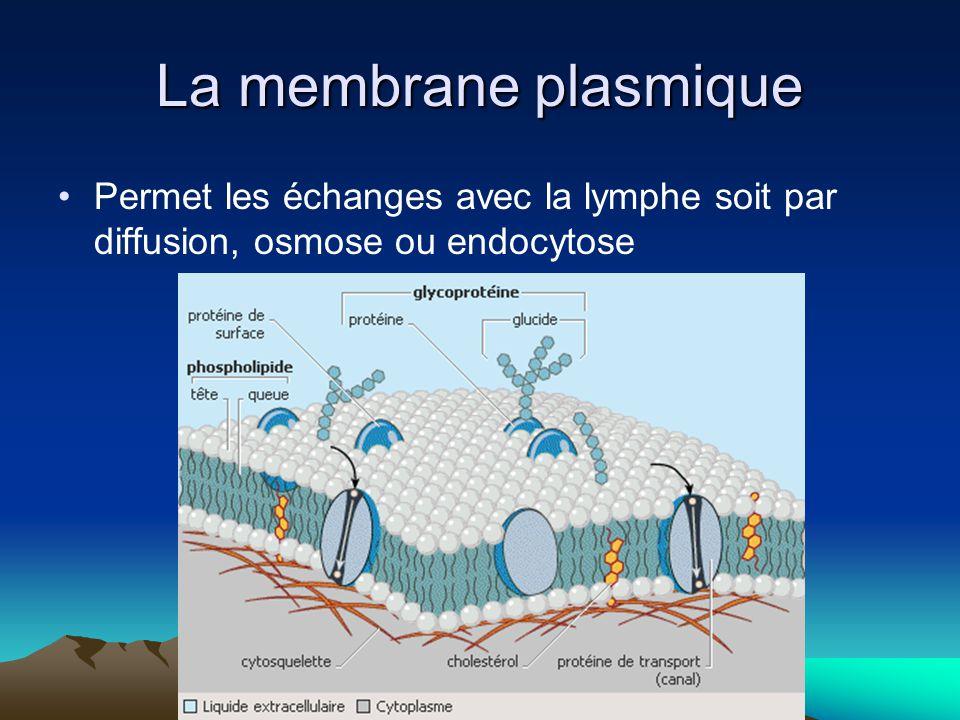 Diffusion: Déplacement de particules, dun milieu concentré vers un milieu moins concentré Les nutriments, loxygène, le gaz carbonique se déplacent par diffusion.