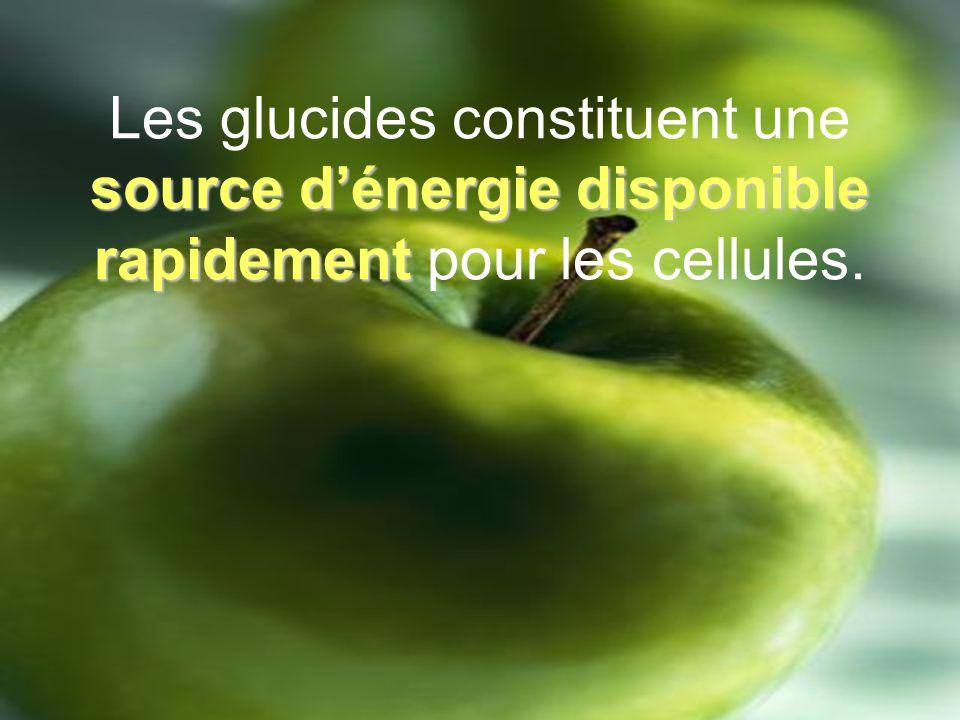 Les lipides: Sont des matières grasses (huile et graisse pouvant provenir de végétaux et danimaux).