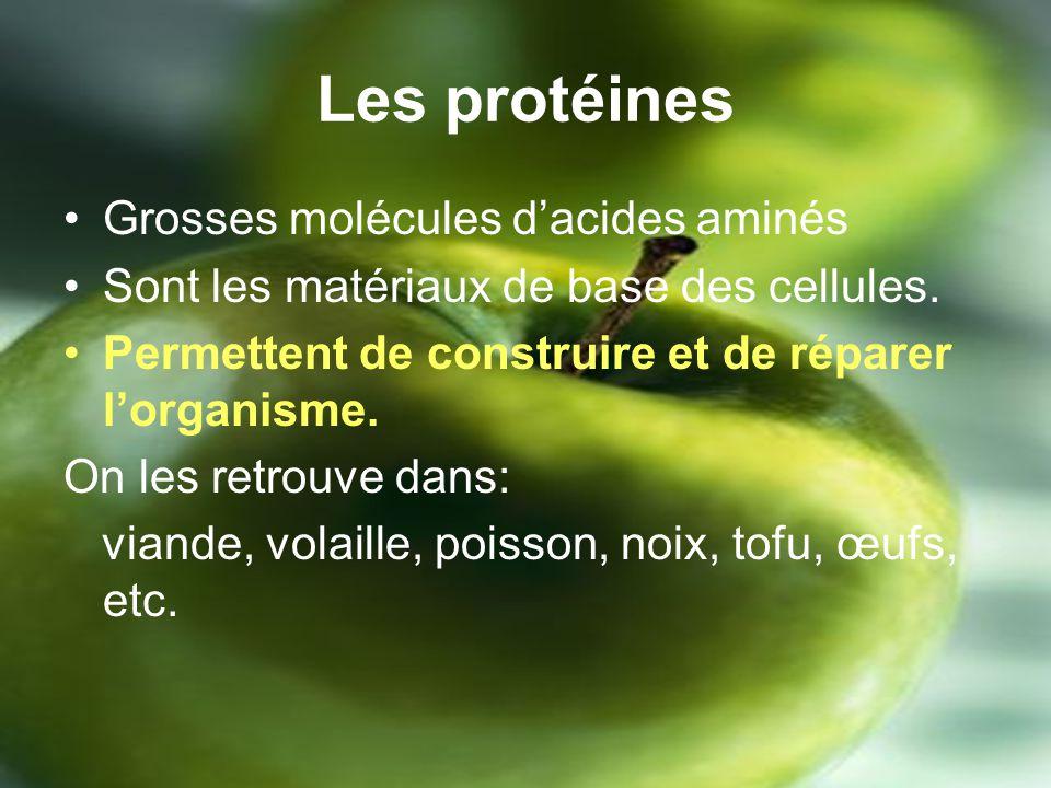 Les protéines Grosses molécules dacides aminés Sont les matériaux de base des cellules.