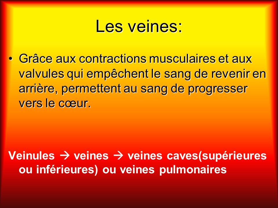Les veines: Grâce aux contractions musculaires et aux valvules qui empêchent le sang de revenir en arrière, permettent au sang de progresser vers le c